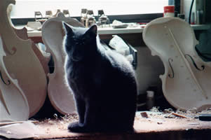 Cat with cello top